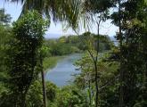 Weg nach Cantaan, Mangroven