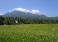 Reisfelder vor Hibok-Hibok